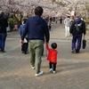 家族で桜を見に行きました
