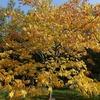 神戸森林植物園、森林もみじ散策シーズン始まり。