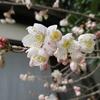 早春の「まつこの庭」(続)