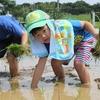 神戸市近郊の学生さん募集!!6月25日(日) 「親子農業体験」 どろんこ!手植えで田植え体験!
