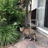 やっぱり外が好き! プーチンさん外猫に。。戻らないww
