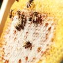 Yo!ho! ミツバチとその他もろもろの日常