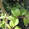 葉の付き方