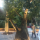 シンガポール2016その②:ガーデンズ・バイ・ザ・ベイ フラワードーム