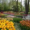 さ~~~始まりますよ! オランダ春のイベント