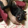 甲斐犬サン、熱烈歓迎!の巻〜の◯P知ッテル甲斐?_φ( ̄ー ̄ )メモメモ……