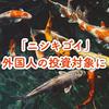 日本産[錦鯉]が外国人の間で投資対象となっている件