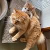 猫のしつけは猫におまかせ