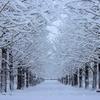 雪が本格的に降ってきました。今年は寒い?大雪?暖房をどうしらいいか?
