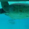 【施設紹介】沖縄美ら海水族館に行きました!