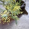 植物を無条件に〝綺麗〟に見せる古道具