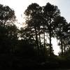 森の植物園