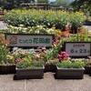 2度目のフラワーパーク 鳥取花回廊