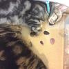 猫のクリスタルヒーリングとお灸