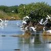 ベリーズ 湿地のボートツアー