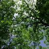 【伝統回帰・自然志向】=昔からの工法や自然素材の家だけが、人や地球にやさしい家とは限らない。