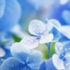 The rainy season - 梅雨