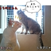 まる&しるびぃあ~カミナリ