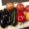 畑の夏野菜でラタトゥイユ♪
