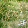 【花粉症】長年に渡りスギ・ヒノキ花粉と戦っている私の対処法まとめ