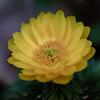 春の訪れを告げる黄色