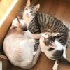 階段の上で暖をとる我が家の5匹の猫たち!