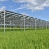 ソーラーシェアリング:水田ソーラーシェアリングは順調に生育中 - 『あきたこまち』を栽培