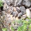 野面積(のづらつみ)の石垣