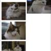 Illustratorドキュメントに配置されている画像の上にファイル名を配置する