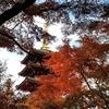 初冬の高幡山