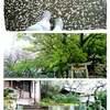 徳島8日目① 雨の55号線~第18番~弦巻坂