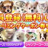 各種犬・猫をカット・シャンプーいたします! ペットショップ/塩釜市/多賀城市/七ヶ浜町