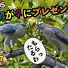 ツミ♂、♀へプレゼント成功!カワセミ雛ドジョウ給餌、カルガモ親子37日目 6月5日今日撮り野鳥動画まとめ