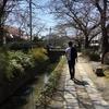 京都に桜を見に行き、咲いてなかったが、楽しめた