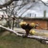 安川緑道公園、散策。春きてます。