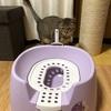 プーチンさんの猫トイレをシステムトイレ以外で気になった「リッチェル コロル 節約簡単ネコトイレ」を買ってみた