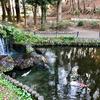 藤崎森林公園の上池(千葉県習志野)
