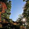 🍁六義園で紅葉の始まりを撮影しました☺
