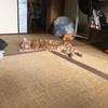 死んだように寝る猫と慌てふためく飼い主