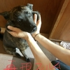 甲斐犬サンの躾教室〜すれ違いゆくわんこ達〜 ε=ε=ε=┏(゚ロ゚;)┛ダダダッ!!