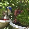 【ガチ初心者】中年オッサンの家庭菜園事情