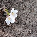 MSB-blooming 幸せのカタチ。