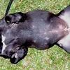 犬の真菌症って治療すればすぐに治るの?