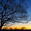 樹木のシルエットとマジックアワー