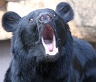 雲取山で熊出没!ツキノワグマに襲われ男性が怪我!奥多摩のクマの詳細