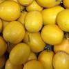 4-366   狙われたレモンを収穫しています。