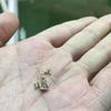 10月10日。アネモネ球根の給水、アネモネ球根植えと矢車菊の種蒔き。