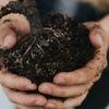 肥料をあげすぎると虫や病気が増えるってホント!?