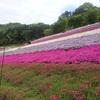 ヤマサ蒲鉾と芝桜