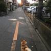 日が長くなってきた夕散歩